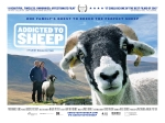 Addicted to Sheep film poster