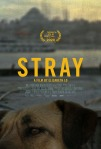 Stray film poster